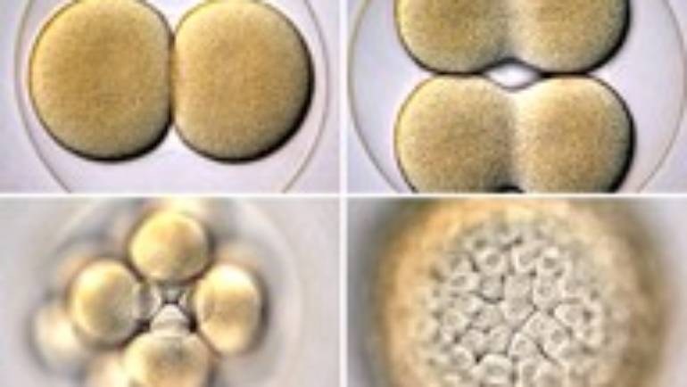 Is your fertility potential unlimited?